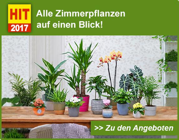 jetzt sch ne zimmerpflanzen sichern lieber garten und. Black Bedroom Furniture Sets. Home Design Ideas