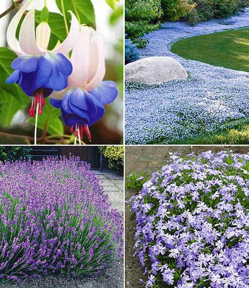 Blauer Stauden Garten 1a Pflanzen Kaufen Baldur Garten