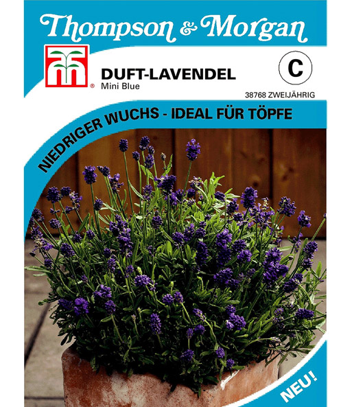 duft lavendel 39 mini blue 39 balkonblumen samen bei baldur. Black Bedroom Furniture Sets. Home Design Ideas
