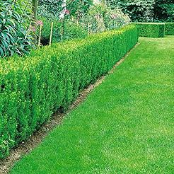 heckenpflanzen jetzt online kaufen & bestellen bei baldur-garten, Garten ideen