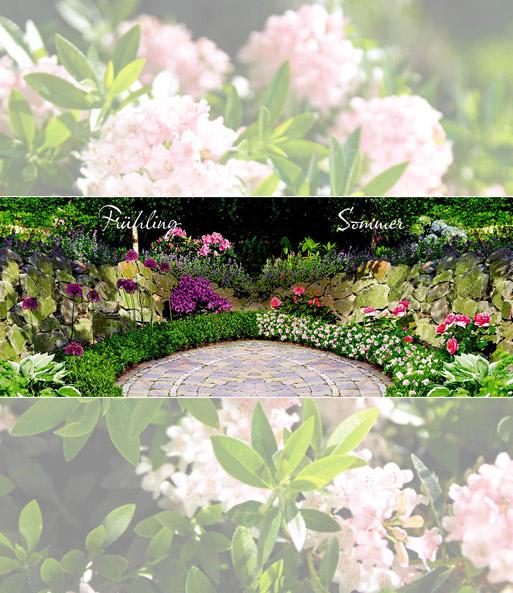 rhododendron 39 bloombux 39 1a qualit t kaufen baldur garten. Black Bedroom Furniture Sets. Home Design Ideas