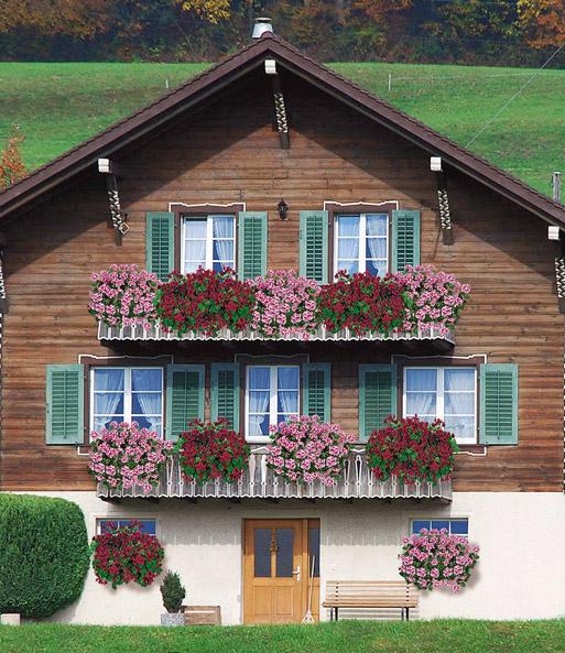 h nge geranien 39 villetta 39 farb mix geranien bei baldur. Black Bedroom Furniture Sets. Home Design Ideas