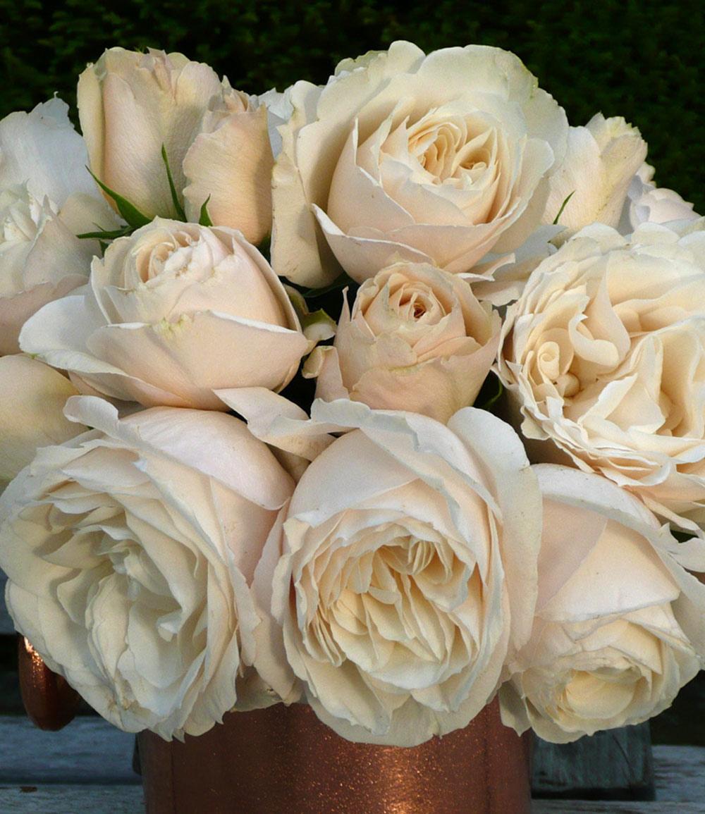 Parfum-Rose 'Princesse Astrid®'