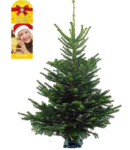 weihnachtsbaum inkl st nder 125 1 zimmerpflanzen a z. Black Bedroom Furniture Sets. Home Design Ideas