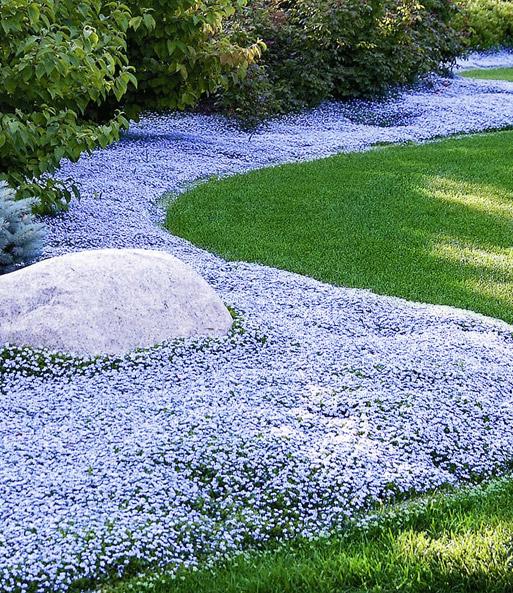 bodendecker kollektion blau und wei steingartenstauden bei baldur garten. Black Bedroom Furniture Sets. Home Design Ideas