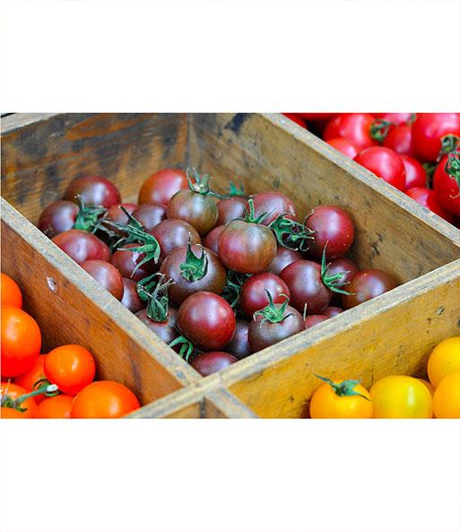 veredelte zucker tomate 39 solena ch tomaten jungpflanzen bei baldur garten. Black Bedroom Furniture Sets. Home Design Ideas