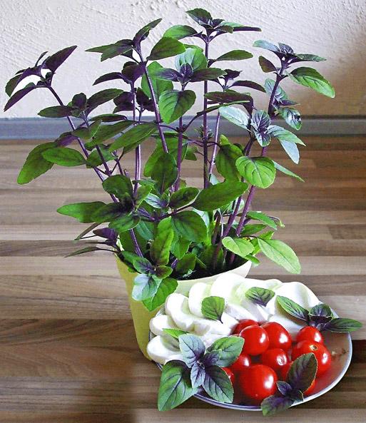 strauch basilikum gr npflanzen bei baldur garten. Black Bedroom Furniture Sets. Home Design Ideas