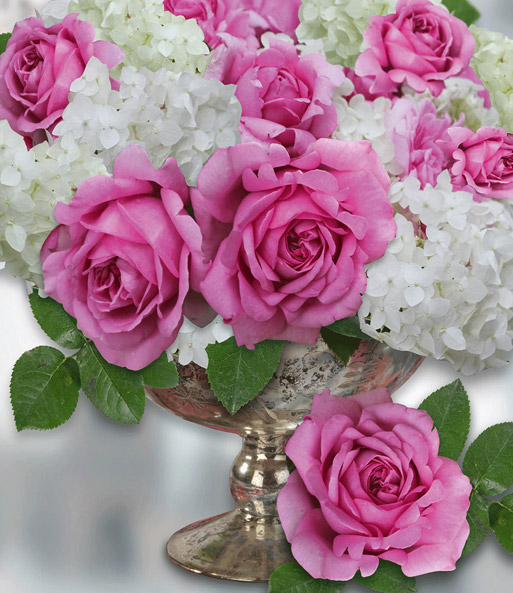 rose d amour rose de pompadour baldur garten