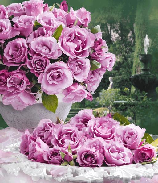 Duftrosen online kaufen & bestellen bei BALDUR-Garten