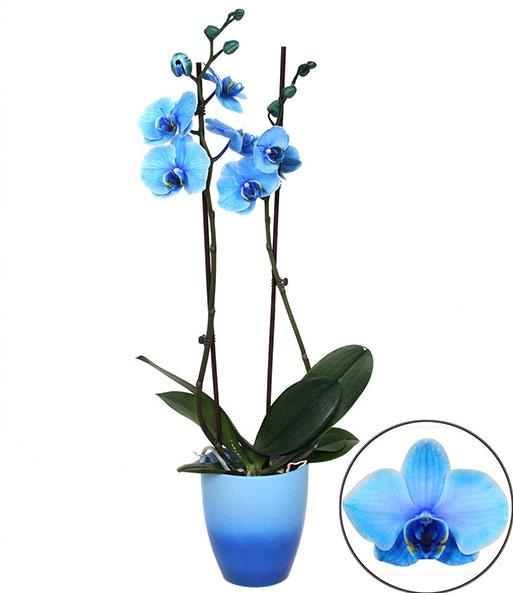 zimmerpflanzen mix 39 bl hende liebli bl hende zimmerpflanzen bei baldur garten. Black Bedroom Furniture Sets. Home Design Ideas
