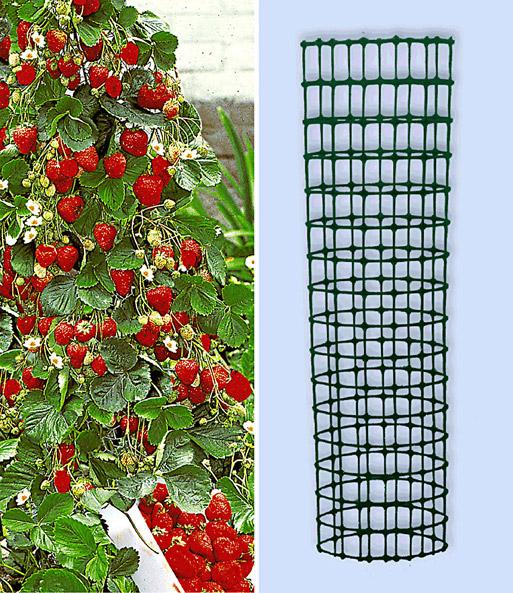 Beliebt Bevorzugt Kletter-Erdbeere 'Hummi®' und Dekor | Erdbeeren bei BALDUR-Garten #XQ_88