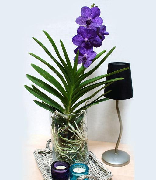 blaue zimmer orchidee princess mikasa baldur garten. Black Bedroom Furniture Sets. Home Design Ideas