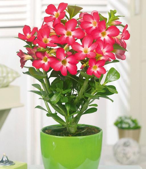 Zimmerpflanzen kollektion sparpreis kollektionen bei for Zimmerpflanzen pflegeleicht