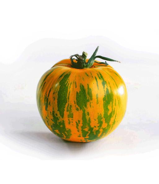 veredelte stab tomate green zebra f1 1a qualit t baldur. Black Bedroom Furniture Sets. Home Design Ideas