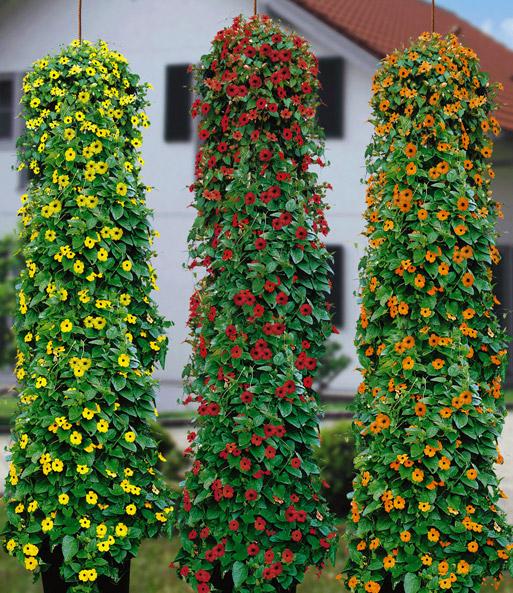 schwarz ugige susanne 39 flower sensa balkon terrasse. Black Bedroom Furniture Sets. Home Design Ideas