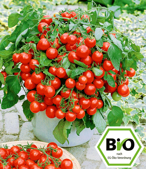 attila hildmann bio tomate 39 balkoni red 39 baldur garten. Black Bedroom Furniture Sets. Home Design Ideas