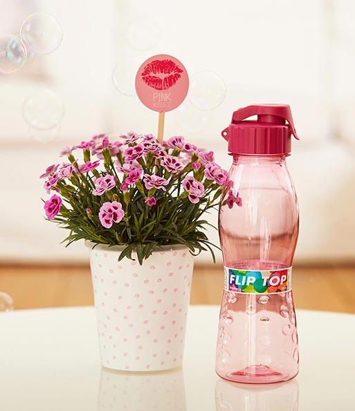 stauden nelke 39 pink kisses 39 set 2 pink kisses bei baldur garten. Black Bedroom Furniture Sets. Home Design Ideas