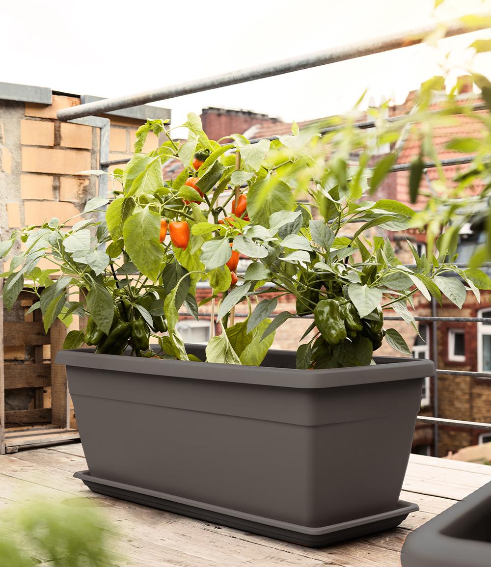 EMSA® 'My City Garden' Pflanztrog granit 80x35x34 cm