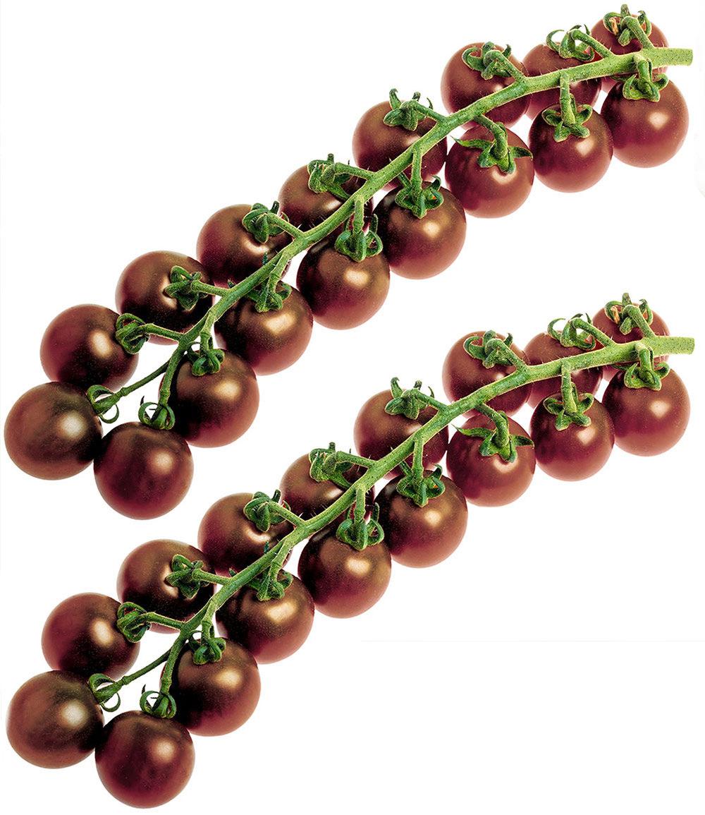 Veredelte Zucker-Tomate 'Solena® Choco' F1