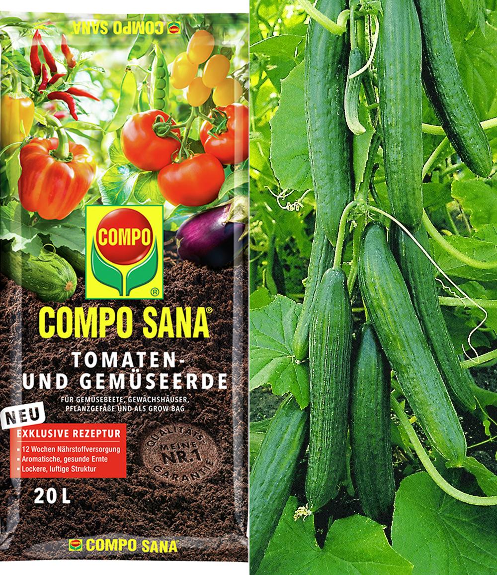 Veredelte Salatgurke 'Phönix®' & COMPO® SANA® Tomaten- und Gemüseerde