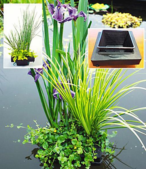 wasserpflanzen insel mit schwimmrin teichpflanzen bei baldur garten. Black Bedroom Furniture Sets. Home Design Ideas