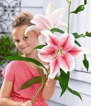 blumenzwiebeln lilien fr hjahr online kaufen bestellen bei baldur garten. Black Bedroom Furniture Sets. Home Design Ideas