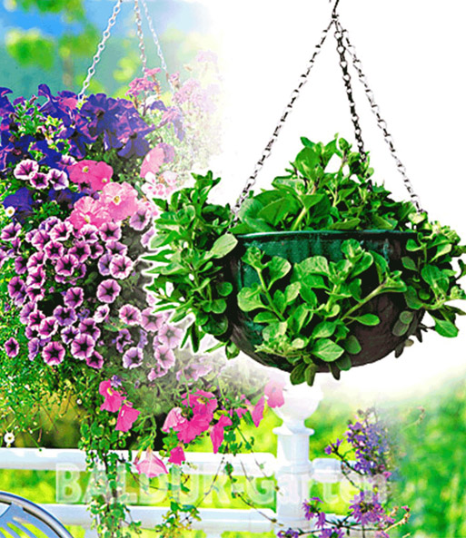 hanging basket jetzt online kaufen baldur garten. Black Bedroom Furniture Sets. Home Design Ideas