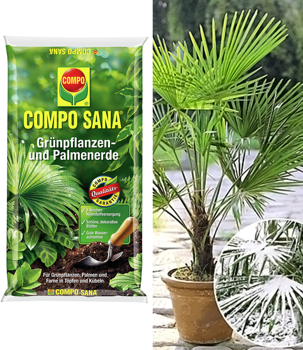 COMPO® SANA® Palmerde & Winterharte Kübel-Palme