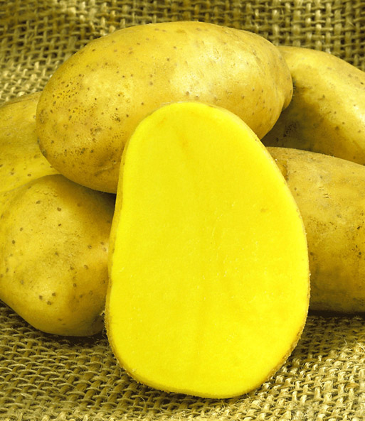 kartoffeln anbau & pflege, Terrassen ideen