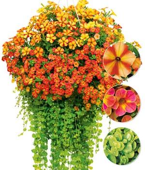 Balkonpflanzen Online Kaufen Bestellen Bei Baldur Garten