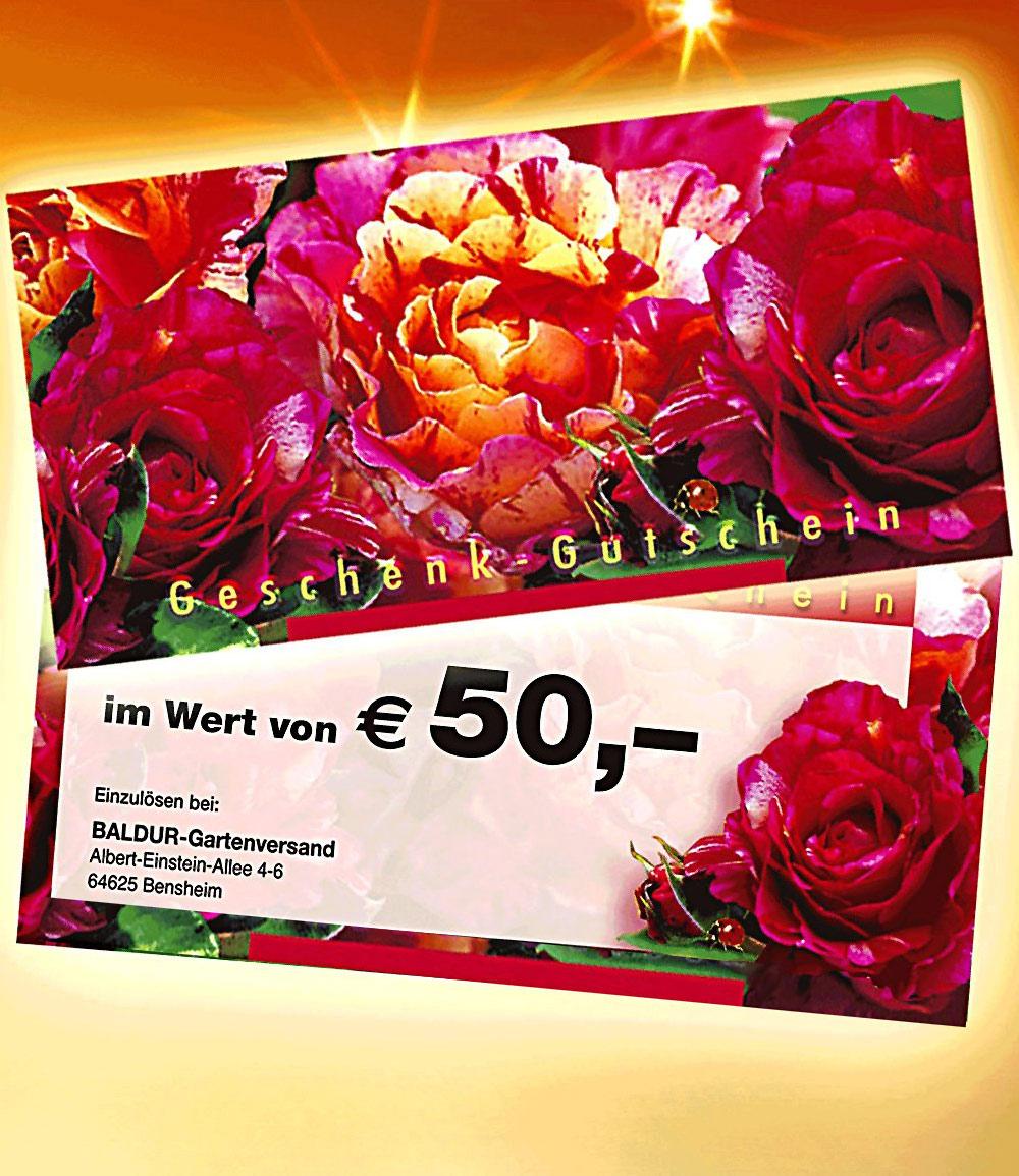 Geschenk-Gutschein im Wert von 50,- EUR