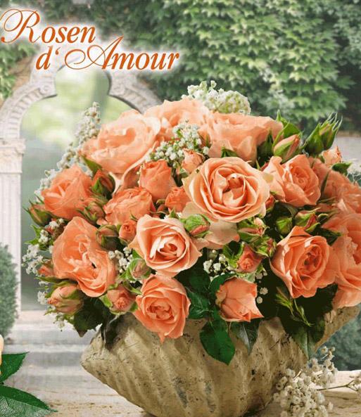 rose der liebe 39 bouquet de mari e 39 zwergrosen