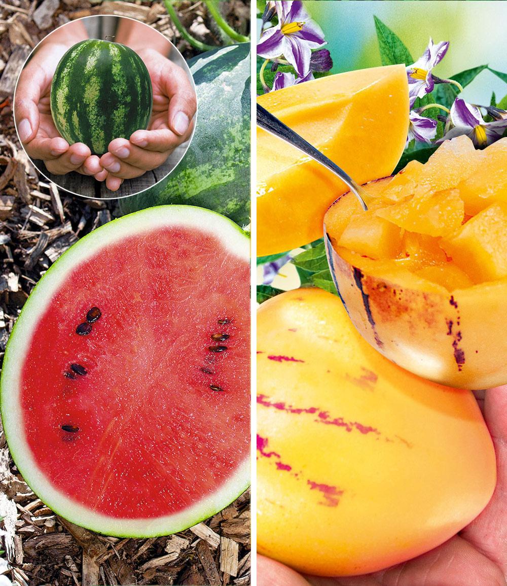 Melonen-Raritäten-Kollektion