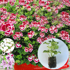 easyplant jungpflanzen online kaufen bestellen bei. Black Bedroom Furniture Sets. Home Design Ideas