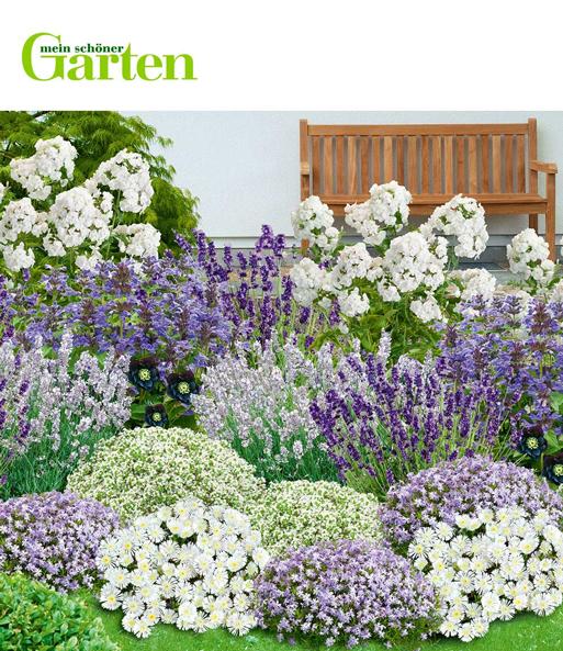 Mein Schoner Garten Bienenfreundlic Staudenbeete Bei Baldur Garten