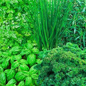 Pflanzensamen Online Kaufen Bestellen Bei Baldur Garten