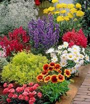 Buntes staudenbeet multi colour top pflanzen online for Baldur garten erfahrung