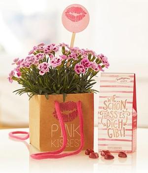 pink kisses bei baldur garten. Black Bedroom Furniture Sets. Home Design Ideas