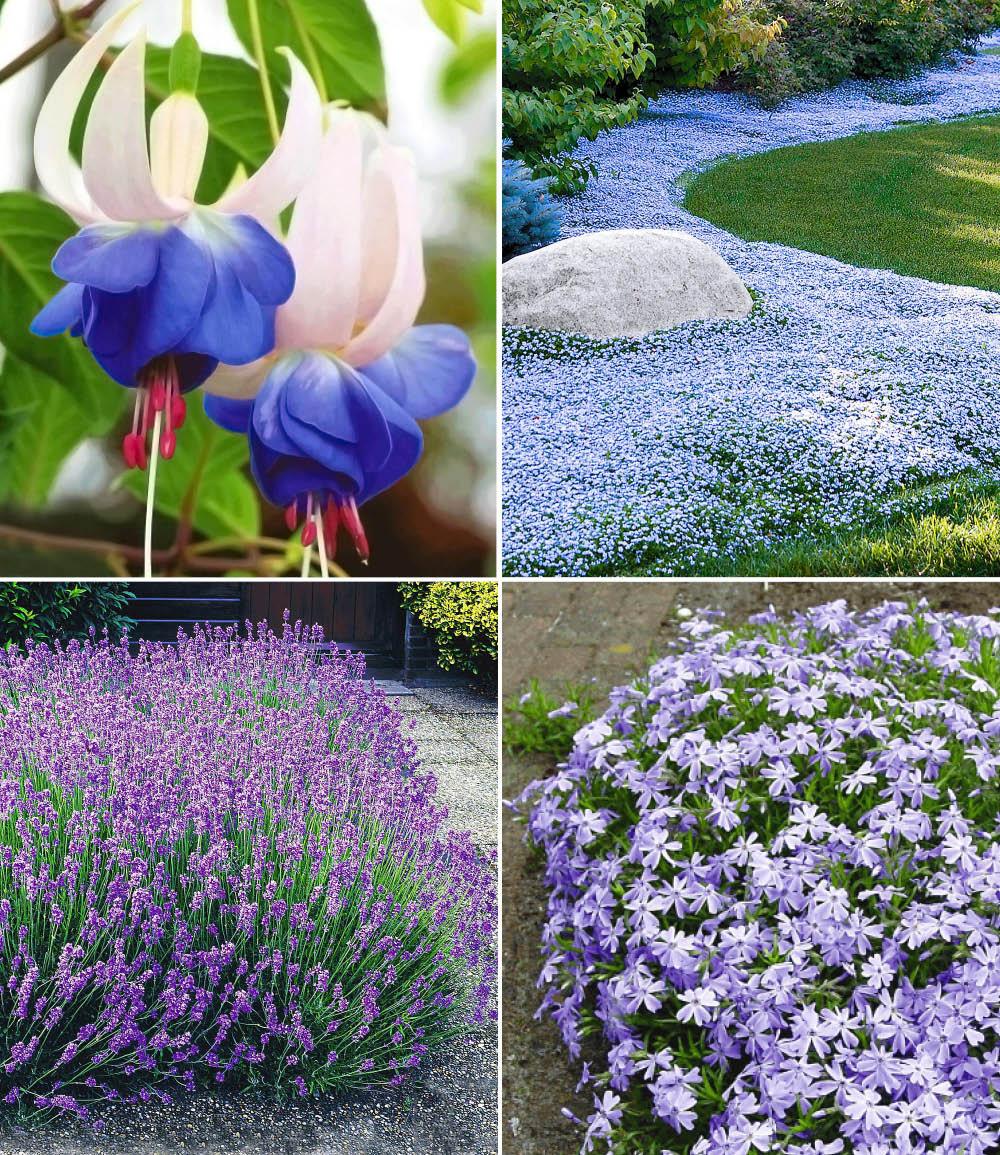 Blauer Stauden-Garten