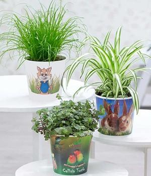 Pflanzen-Set ´Leckereien für Ihr Haustier´,3 Pf...