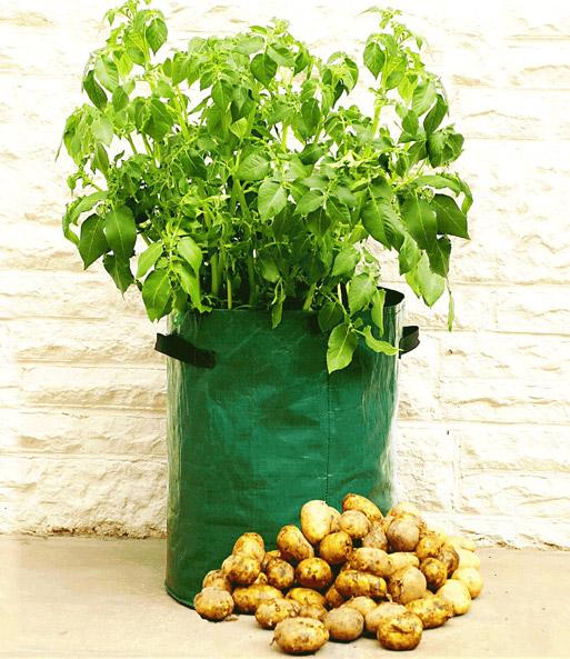 pflanzbeutel für kartoffeln pflege tipps, Terrassen ideen