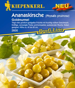 Physalis Pruinosa ´Goldmurmel´,1 Portion