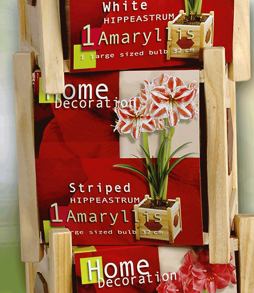 amaryllis 39 gestreift 39 inkl holztop amaryllis bei baldur. Black Bedroom Furniture Sets. Home Design Ideas