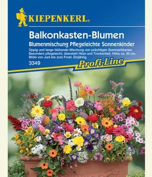 Balkonkasten-Blumenmix ´Pflegeleichte Sonnenkinder´,1 Portion