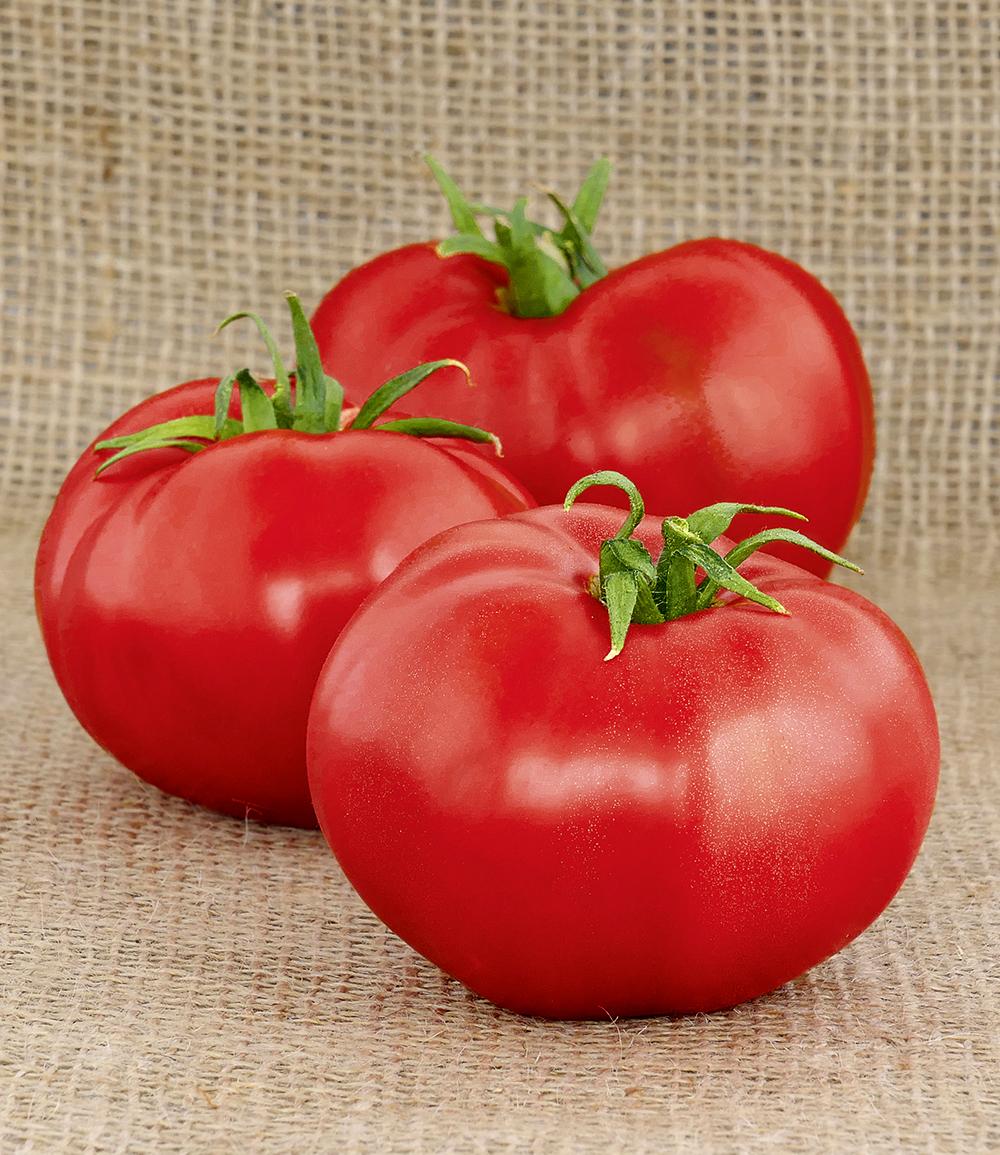 Rote Tomate 'Berner Rose'