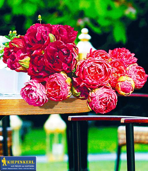 Baldur garten rosen  ROSEN-Tulpen-Raritäten | Tulpen bei BALDUR-Garten