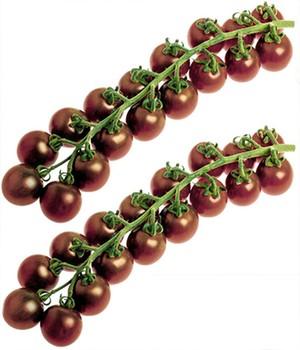 Veredelte Zucker-Tomate  - Solena&reg, Choco -  F1,2 Pflanzen