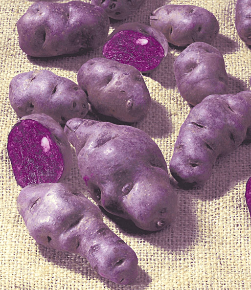 Kartoffeln Anbau & Pflege Garten Mit Kartoffeln Pflege Tipps