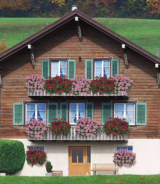 h nge geranie villetta 39 white burg h ngepflanzen bei baldur garten. Black Bedroom Furniture Sets. Home Design Ideas