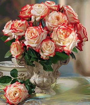 Parfum-Rose ´Impératrice Farah&reg,´,1 Pflanze